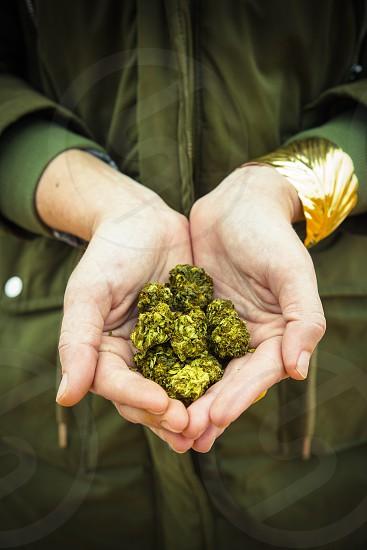 Girl Hands holding marijuana flowers photo