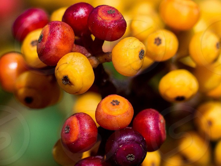macro photography of round red and yellow fruits photo