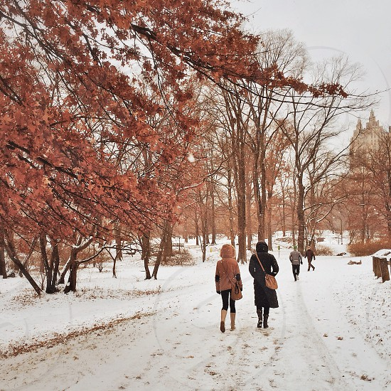 Central Park in winter.  photo