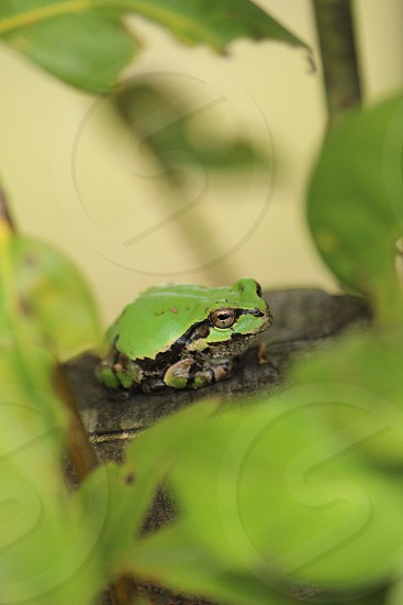 fucos photography of green and black frog on black three branch during daytime photo