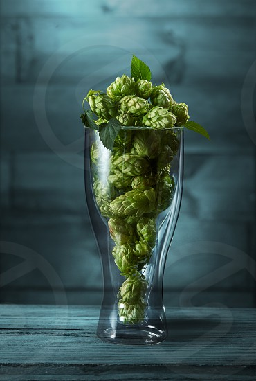 Dried green hops in a glass on the blue wooden background photo
