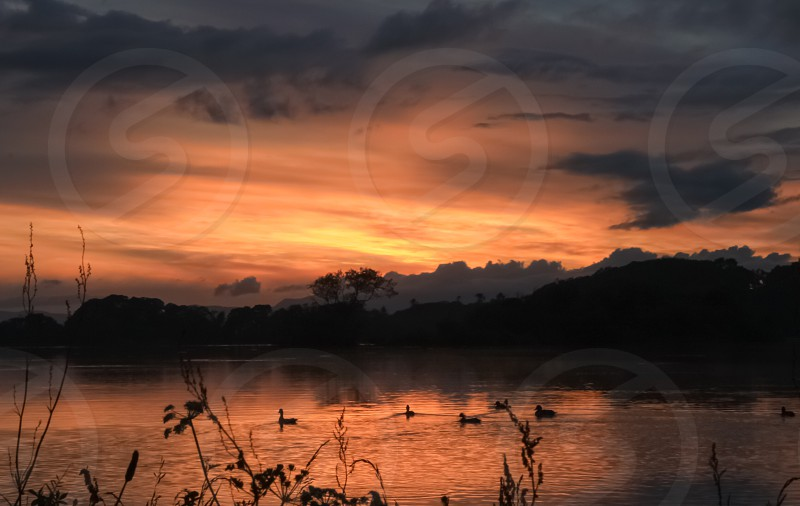 Sunset lake reflection landscape ireland Killarney park serenity scenic colourful duck bird  photo