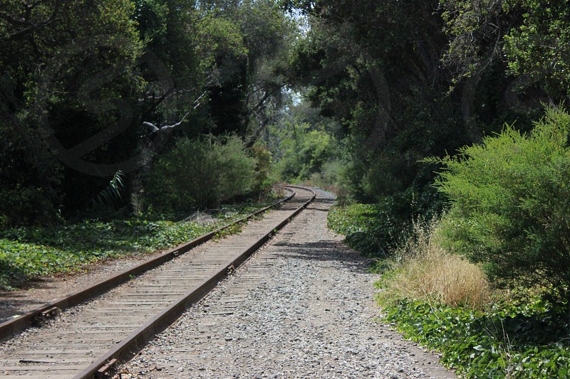 tracks into the woods photo
