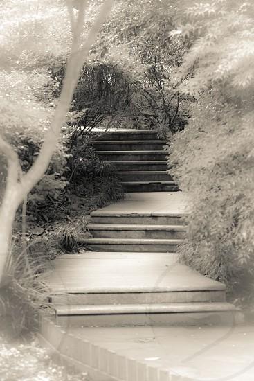 Steps Path China photo