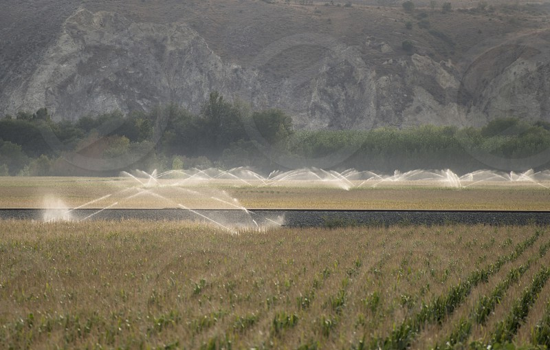 Watering sprinkler systems and corn photo