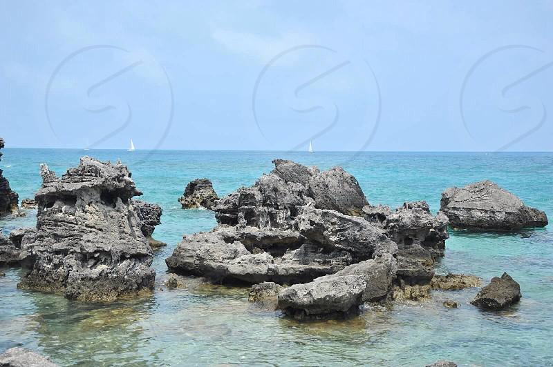 Bermuda photo