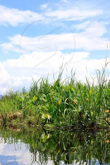 green grass near lake photo