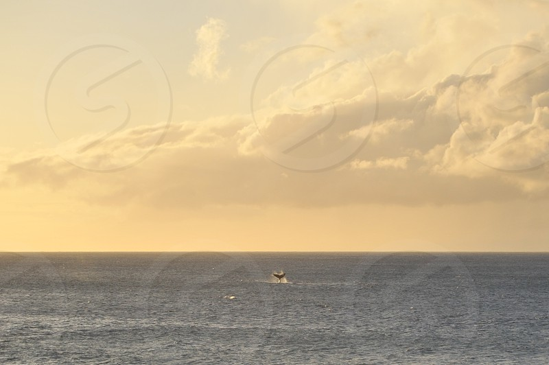 Hawaii Island Adventure Whale Tale photo