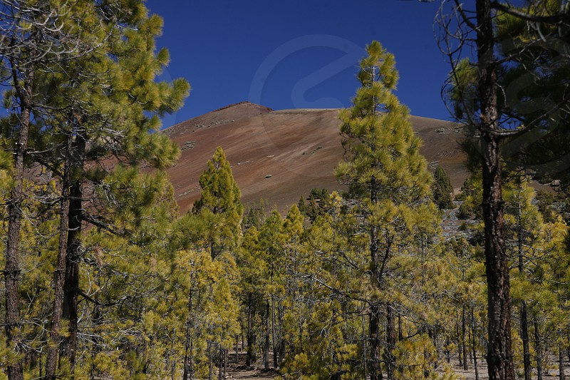 The Paisaje Lunar on the Island of Tenerife on the Islands of Canary Islands of Spain in the Atlantic.   photo