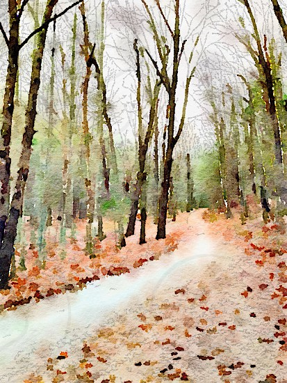 Winding road through TN forest--using the Waterlogue app. photo