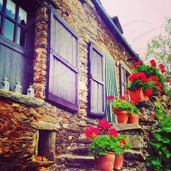 Geraniums Aveyron France  photo