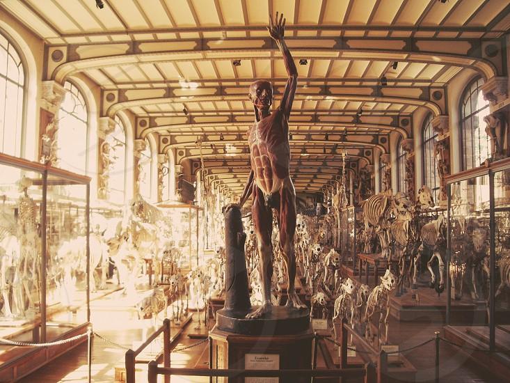 Musée d'histoire naturelle Paris France.  photo