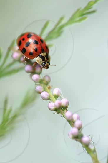 red ladybug sitting on plant photo