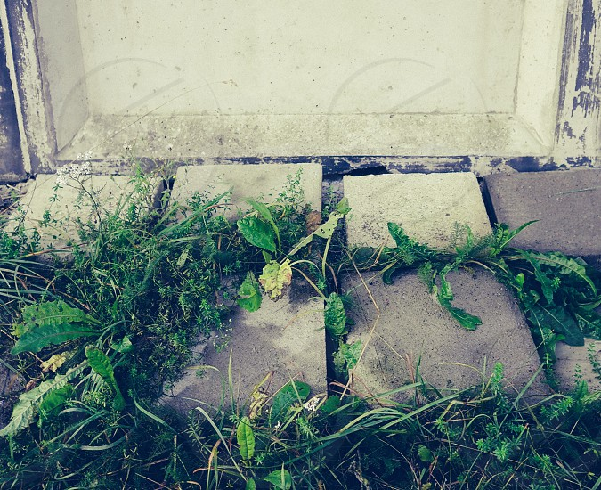 concrete and vegetation against a wall photo