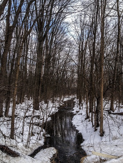 view of a snowy forest photo