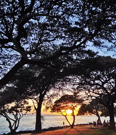 green tree with sunset view photo