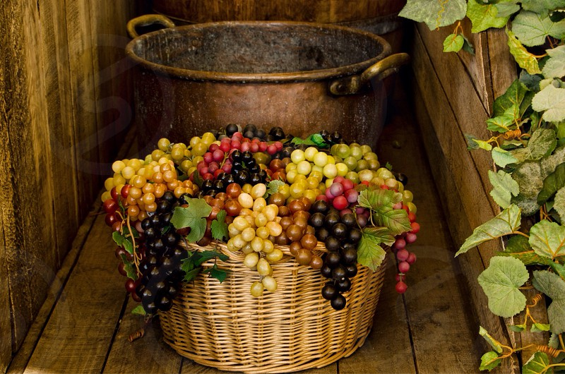 harvested grapes in woven basket photo
