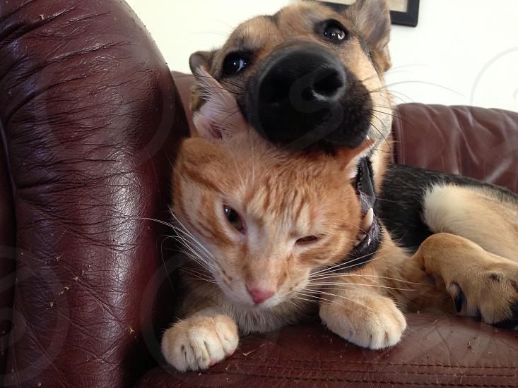 Dog eats cat.  photo