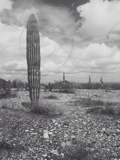 The Sonoran desert can be a beautiful place photo