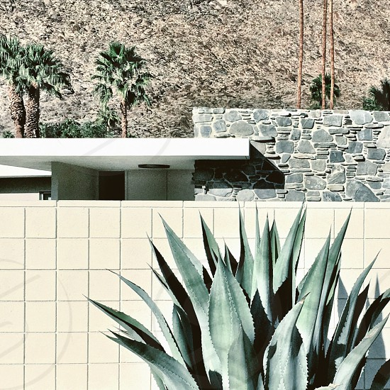 Cactus building desert Palm Springs photo