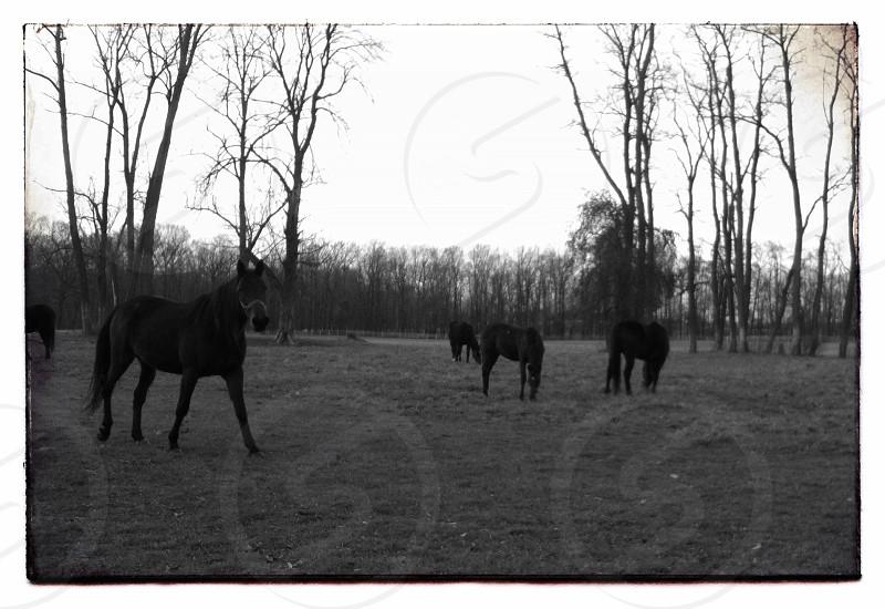 Horses in Ohio photo
