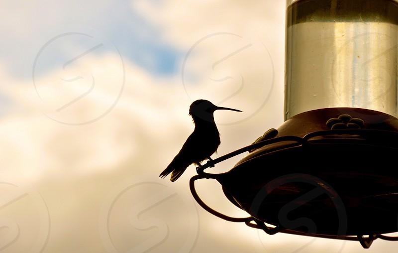 Hummingbird in shadow on right photo