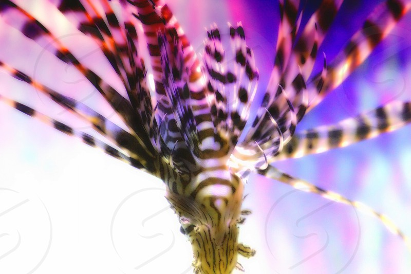 Color feathers  photo