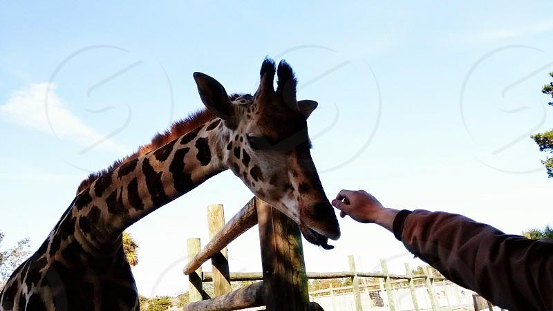 the zoo in gulf breeze FL photo