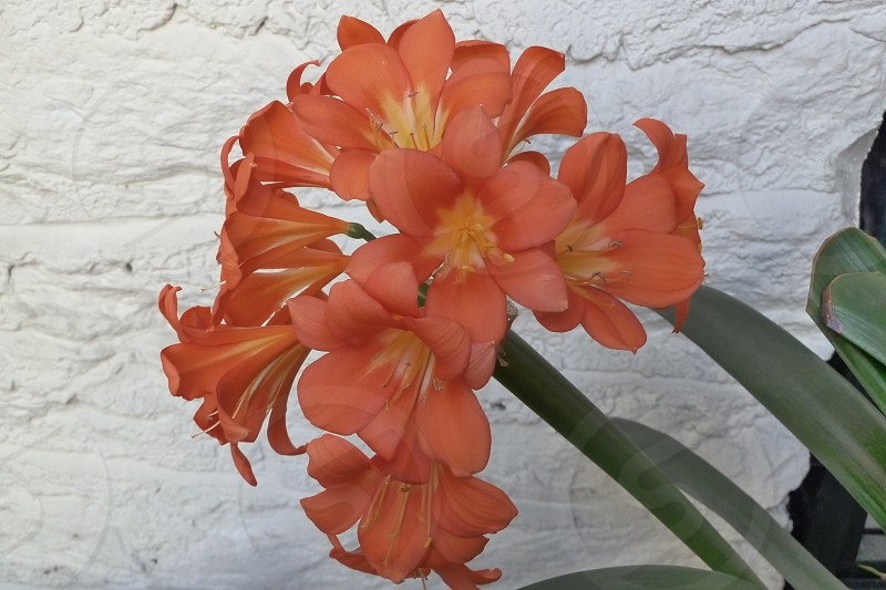 Floral Orange and White photo