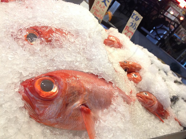 red saltwater fishes froze on crushed ice photo
