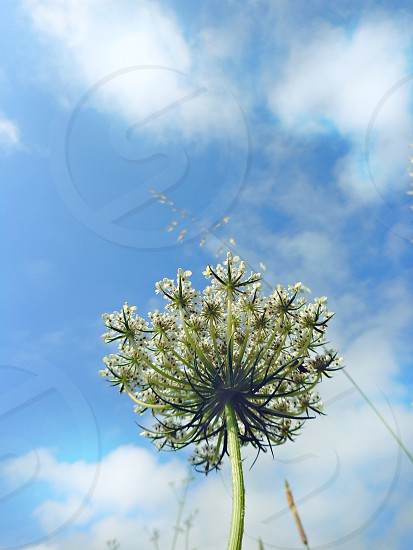 bug perspective. #lovenature #anis #frogview #outdoors #plant #bluesky #greenery #springtime photo