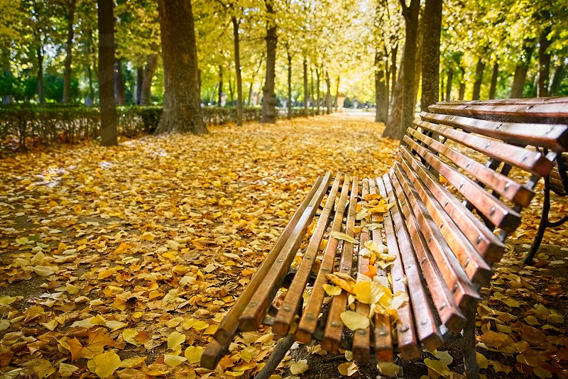 Bench in a park covered with leaves in autumn photo