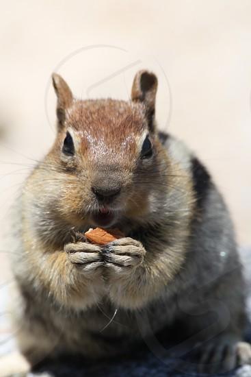 animal photograph of squirrel photo