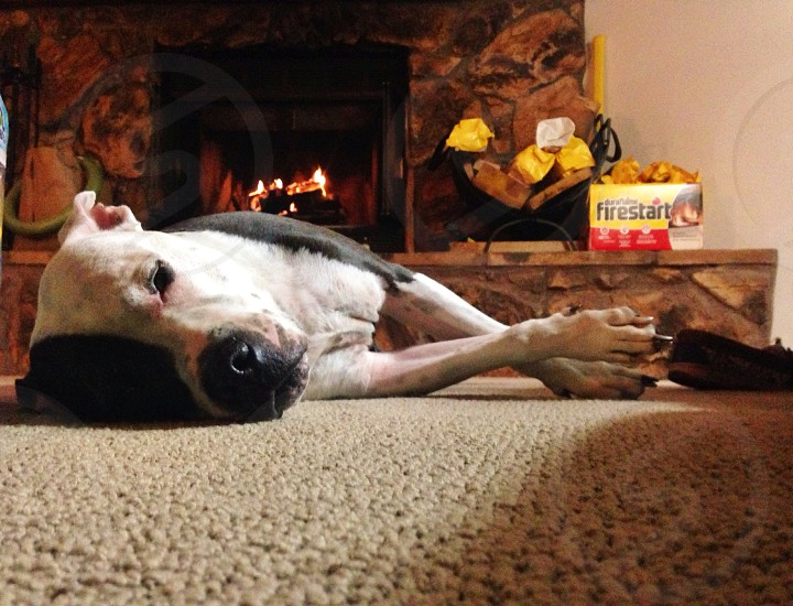Dog laying down at cabin in front fireplace photo