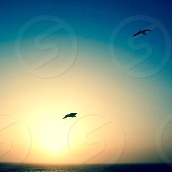 Flying birds at sunset photo