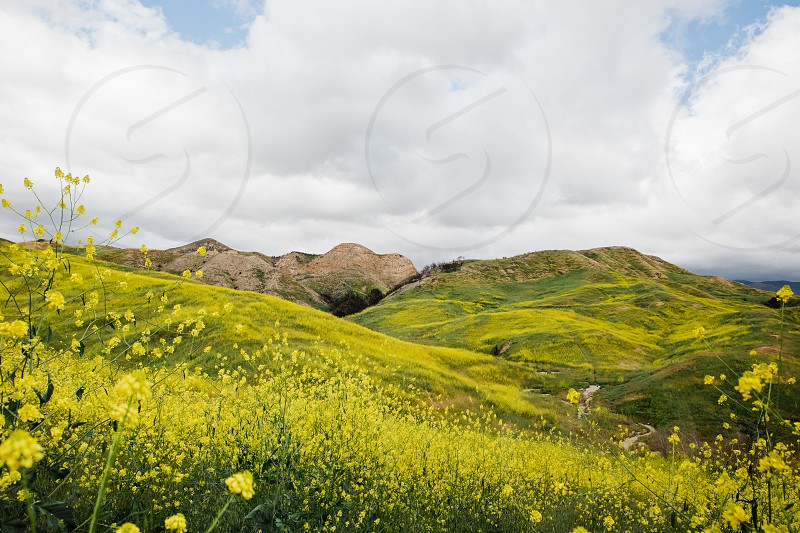 Spring bloom in Southern California  photo