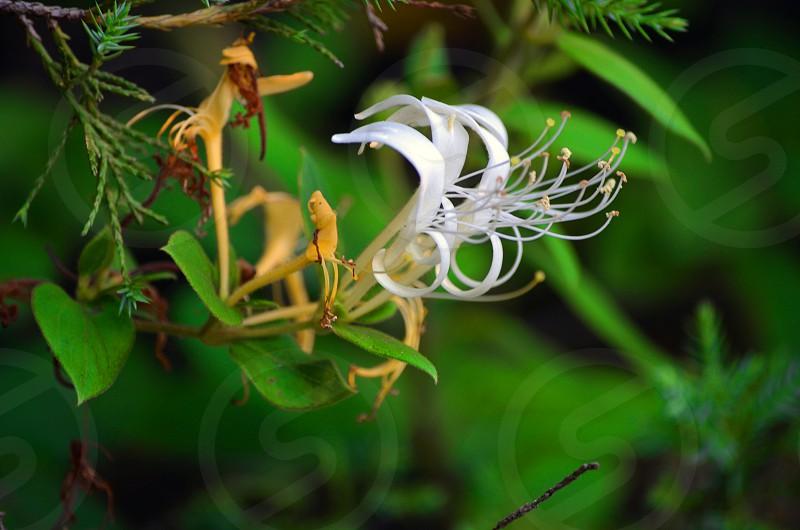flower & leafs green photo