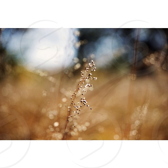 single focus brown grass shot photo