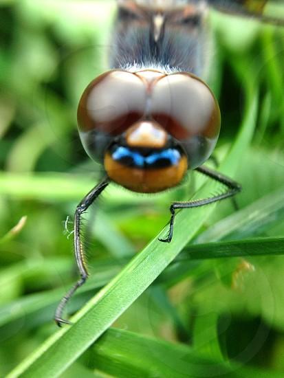 fly's head photo