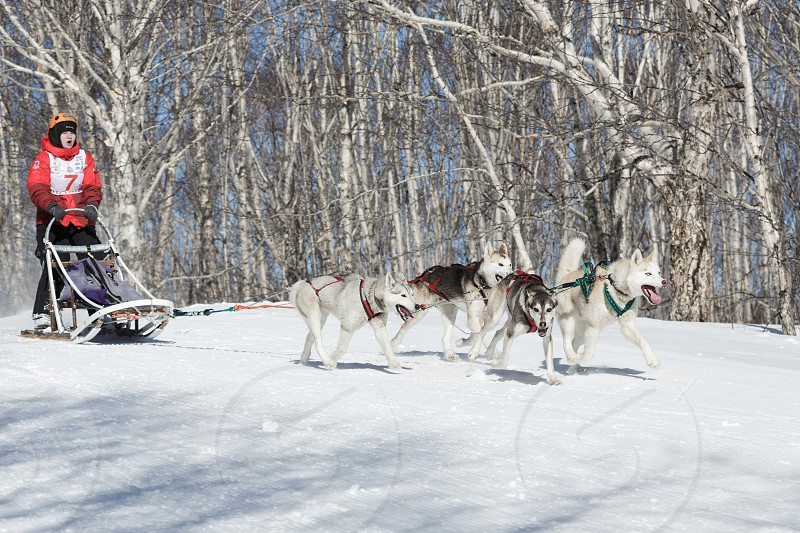 PETROPAVLOVSK-KAMCHATSKY KAMCHATKA PENINSULA RUSSIA - FEBRUARY 23 2017: Kamchatka Kids Competitions Sled Dog Race Dyulin (Beringia). Runs dog sled young Kamchatka musher Maria Kazantseva. photo