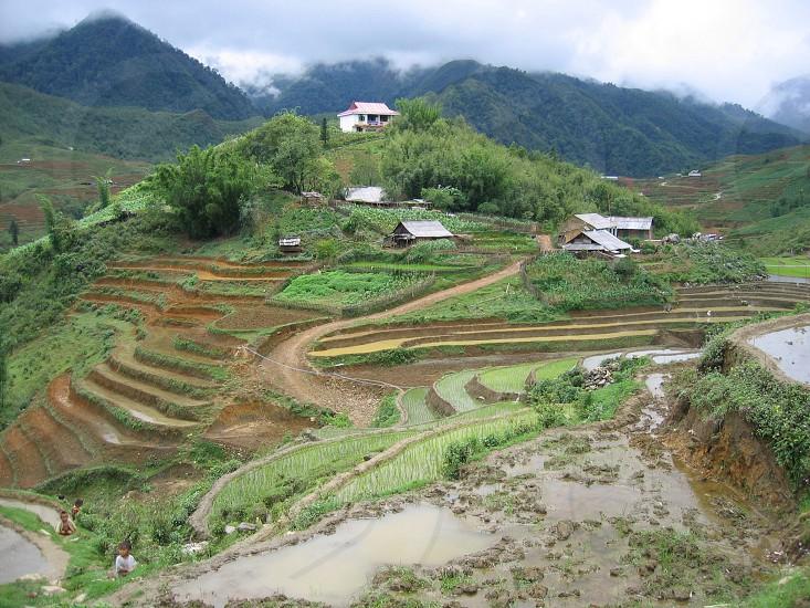 Rice patties in Sapa Vietnam photo
