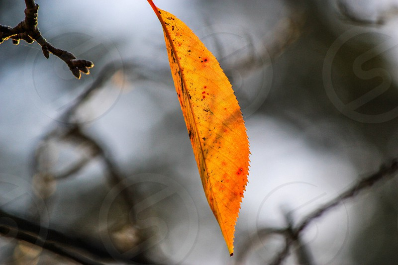 Leaf color yellow brown  photo
