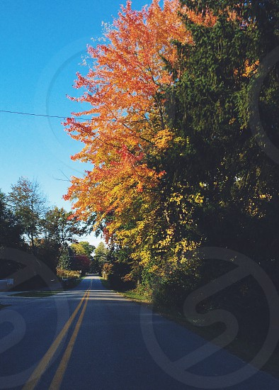 Autumn • fall • travel • Michigan • wander • Pure Michigan • journey • leaves  photo