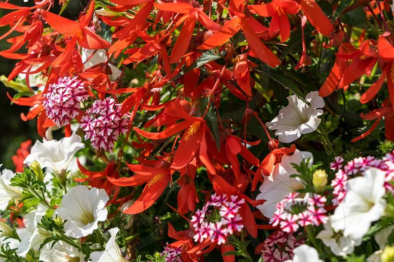 East Grinstead in Bloom photo
