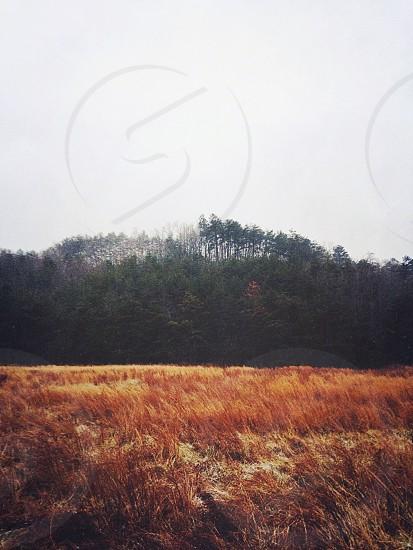 green trees on hilltop over orange field under white sky photo