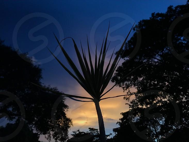 Dusk seasons plants sunset  photo