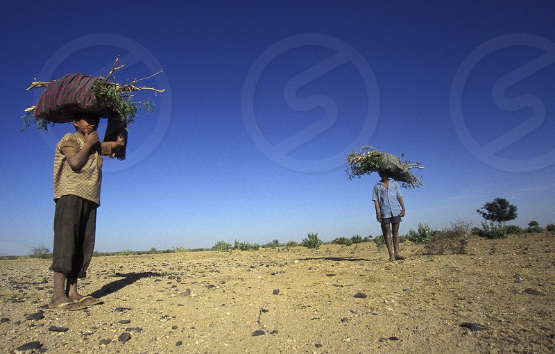 People go for wood in the deset of tar near the town of Barmer in the province Rajasthan in India. photo