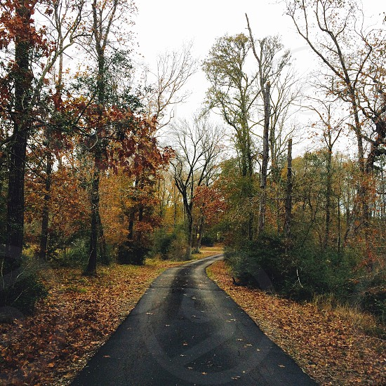 Road with woods. Fall.  photo