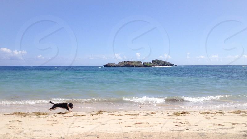 black and white dog near sea shore photo