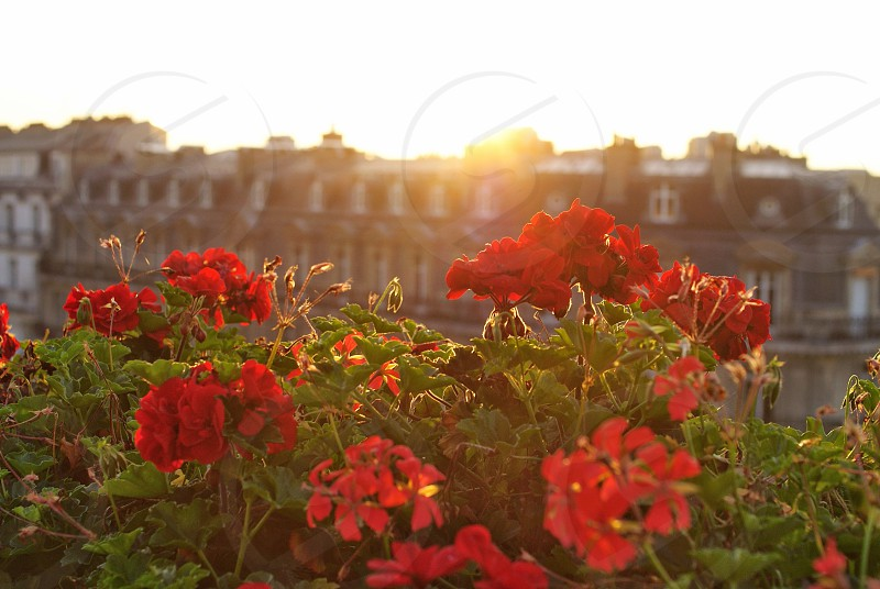 Paris sunrise rooftop  photo
